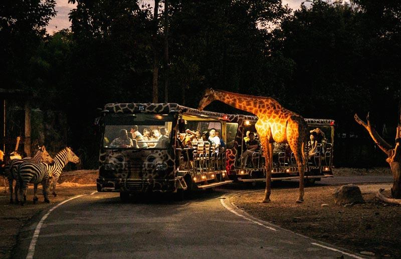 chiang-mai-night-safari-01