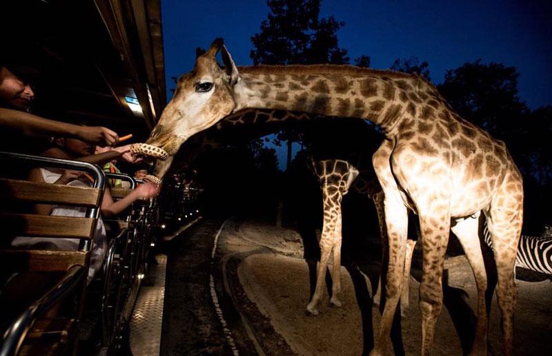 chiang-mai-night-safari-02
