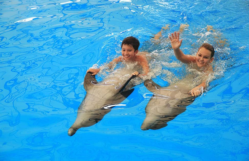 Click to enlarge image 01-dolphins-show.jpg